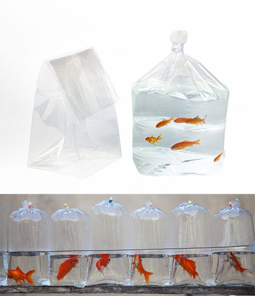 Square Bottom and Flat Poly Tropical Fish Bags